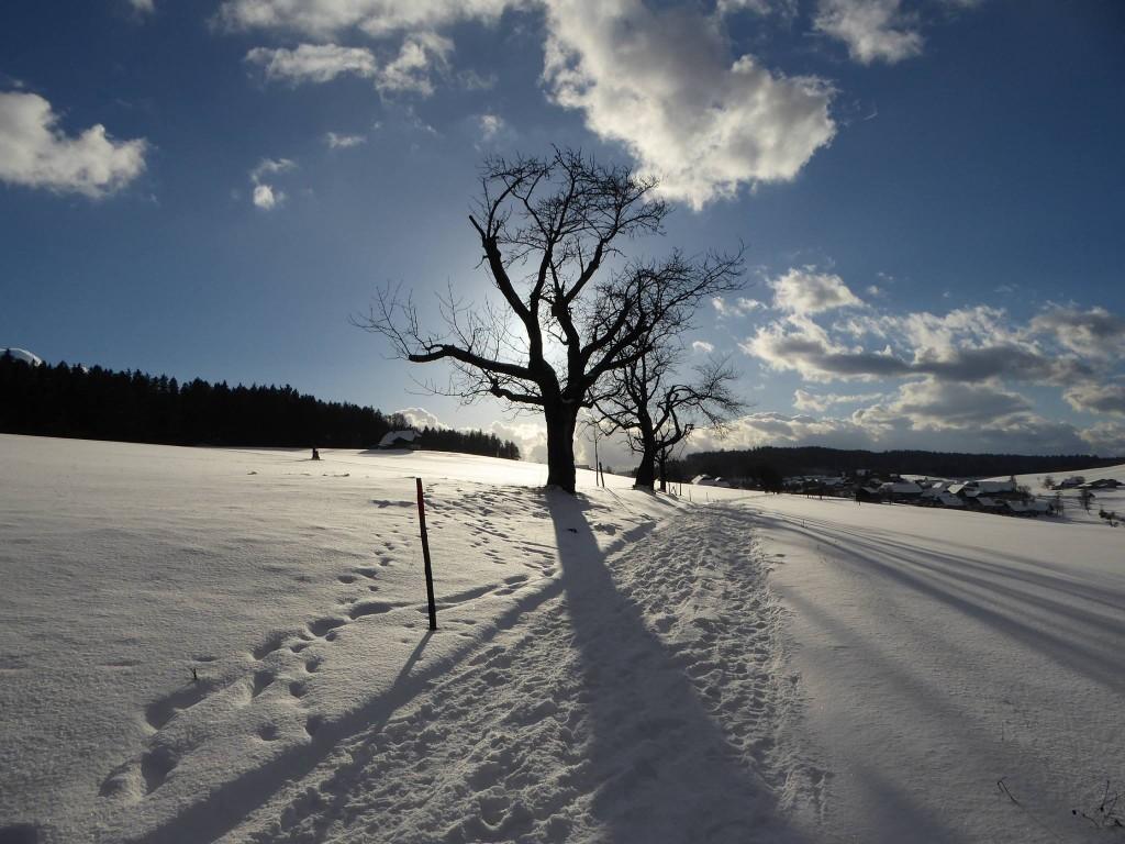 Wahlendorf_Winter_02